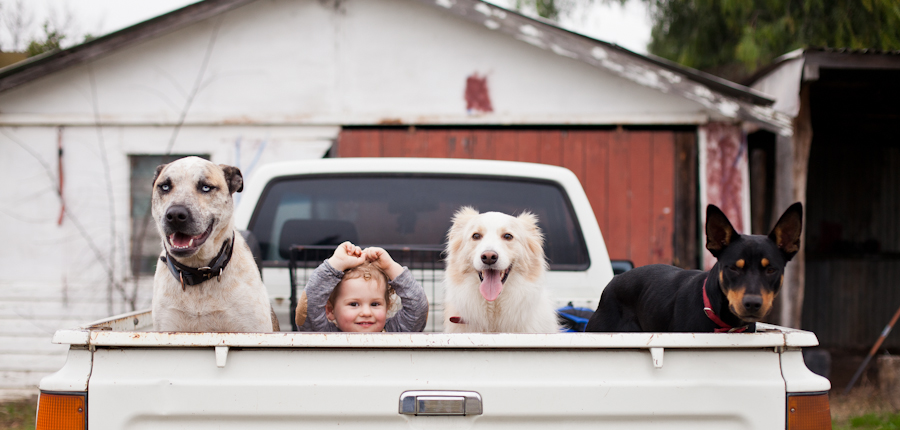 FAMILIES_Dogsinute